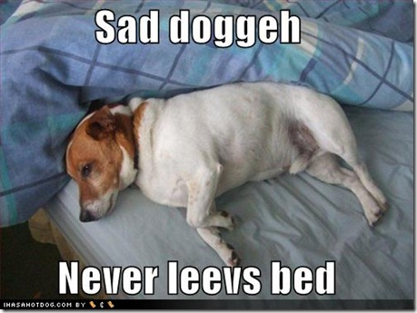 loldogs-sad-doggeh-never-leevs-bed